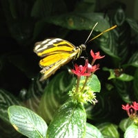 Photo taken at The Butterfly Conservatory at the American Museum of Natural History by Jason H. on 2/12/2012