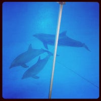 Photo taken at Dolphin Show by Jo Anne M. on 7/30/2012