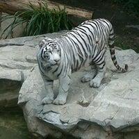 Photo taken at Zoológico de Chapultepec by Ari K. on 7/22/2012