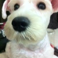 Photo taken at Asean Puppy by Joreen N. on 6/20/2012