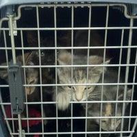 Photo taken at Michigan Humane Society by Katelyn M. on 7/13/2012