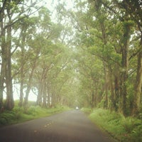 Photo taken at Tunnel Of Trees by Mada B. on 5/18/2012