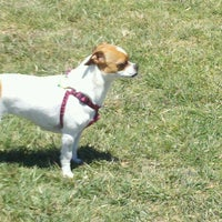 Photo taken at Camp Barkeley Dog Park by Christina R. on 4/22/2012