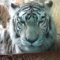 Photo taken at Fort Worth Zoo by Courtney S. on 3/9/2012