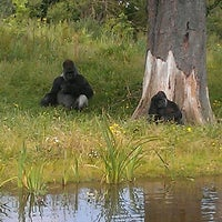 Photo taken at Dublin Zoo by Alec L. on 7/21/2012