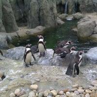 Photo taken at Calgary Zoo by Elle N. on 6/2/2012