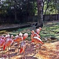 Photo taken at Little Rock Zoo by Daniel H. on 8/12/2012