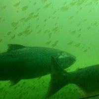 Photo taken at Hiram M. Chittenden Locks by Nick P. on 8/14/2012