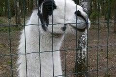 Кони-пони в Михалово - Агроусадьба