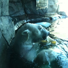 Photo taken at Polar Bear Odyssey At Como Park by Erich H. on 3/25/2012