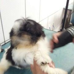Photo taken at Pet Shop York News by Renato F. on 9/1/2012