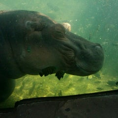 Photo taken at Saint Louis Zoo by Bill S. on 5/18/2012