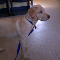 Photo taken at Franklin Veterinary Clinic by Eddie M. on 7/16/2012