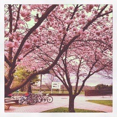 Photo taken at Purchase College by Fernando G. on 3/29/2012