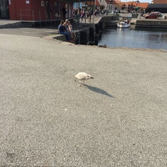 Photo of Gudhjem Havn in Gudhjem, Bo, DK