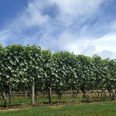 Photo taken at Truro Vineyards of Cape Cod by Dan B. on 8/2/2013