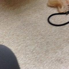 Photo taken at McKillip Animal Hospital by Ava G. on 10/21/2014