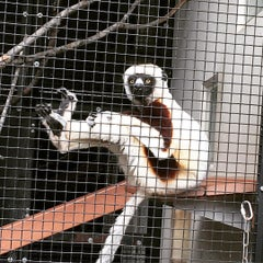 Photo taken at Duke Lemur Center by Jesse T. on 11/10/2015