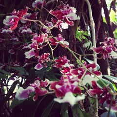 Photo taken at United States Botanic Garden by Adam G. on 9/29/2012