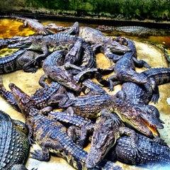 Photo taken at The Million Years Stone Park & Pattaya Crocodile Farm (อุทยานหินล้านปีและฟาร์มจระเข้พัทยา) by Igor Z. on 4/14/2013