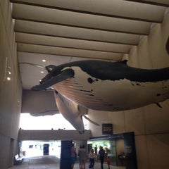 Photo taken at Queensland Museum Whale Mall by Jennifer D. on 2/9/2014