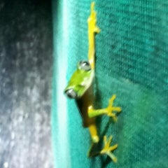 Photo taken at Frog Pond of Monteverde by Daianna M. on 9/28/2012