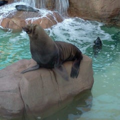 Photo taken at Sea Lion and Otter Stadium by Jessie W. on 1/13/2013