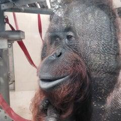Photo taken at Monkey World - Ape Rescue Centre by Joe B. on 10/22/2015