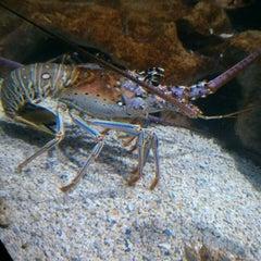 Photo taken at Adventure Aquarium by Vinnie D. on 4/15/2013