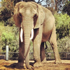 Photo taken at San Diego Zoo by Tom B. on 4/11/2013