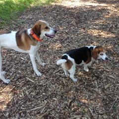 Photo taken at Wag Farms Dog Park by Darby H. on 5/31/2013