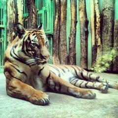 Photo taken at Zoo Praha | Prague Zoo by Maria M. on 3/7/2013