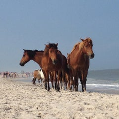 Photo taken at Assateague Island National Seashore (Maryland) by Brian G. on 7/21/2013