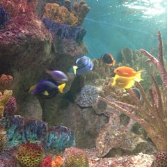 Photo taken at New England Aquarium by Veronica Y. on 7/3/2013