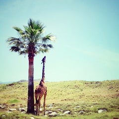 Photo taken at The Living Desert Zoo & Botanical Gardens by Lindsey G. on 5/27/2013
