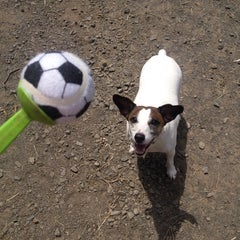Photo taken at Oakton Dog Park by Linda H. on 7/18/2014