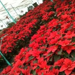 Foto tomada en Mercado de Plantas y Flores  Madreselva por Ramon P. el 12/11/2012