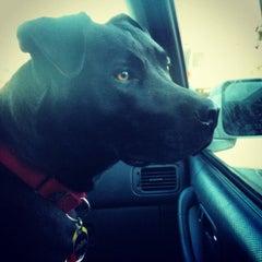 Photo taken at Asheville Humane Society by Jimmy L. on 11/18/2012