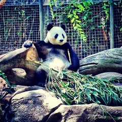 Photo taken at San Diego Zoo by Christopher E. on 7/6/2013