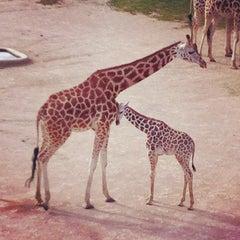 Photo taken at Zoo Praha | Prague Zoo by Rane M. on 6/23/2013