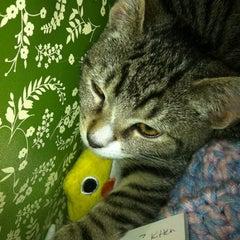 Photo taken at Humane Society of NY by Jenn C. on 11/29/2012