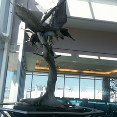 Photo taken at Daytona Beach International Airport (DAB) by Kris C. on 3/5/2013