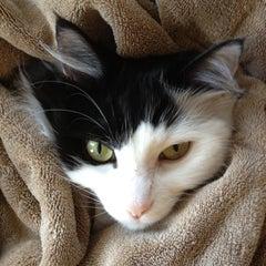 Photo taken at Three cat time by Erik E. on 10/4/2012