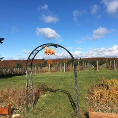 Photo taken at Silver Leaf Vineyard and Winery by Jennifer S. on 10/25/2015