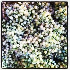 Photo taken at Stinson Vineyards by Stinson V. on 9/26/2012
