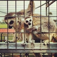Photo taken at Sharkarosa Wildlife Ranch by Ryan P. on 5/16/2013