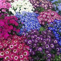 Foto tomada en Mercado de Plantas y Flores  Madreselva por Kar O. el 3/3/2013