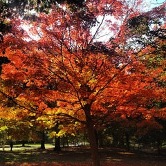 Photo taken at Prospect Park by Stevie V. on 10/18/2012