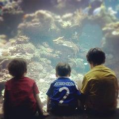Photo taken at Steinhart Aquarium by Ed H. on 9/30/2012
