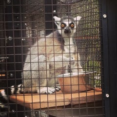 Photo taken at Duke Lemur Center by Nick P. on 4/12/2013